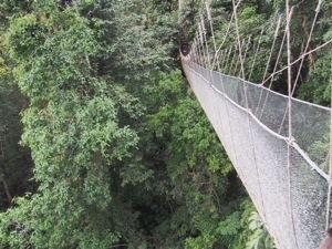 Canopy Walk, Ranau.jpg